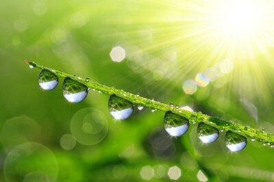 Bild Fresh green grass with dew drops closeup. Nature Background