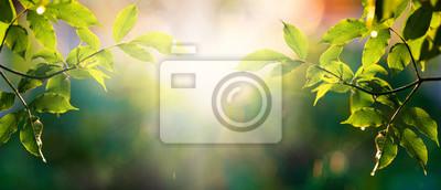 Bild fresh green leaves in spring and bokeh background