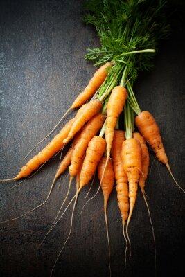 Bild Frische Karotten