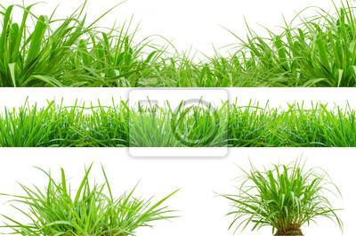 Bild frischem grünen Gras Frühjahr