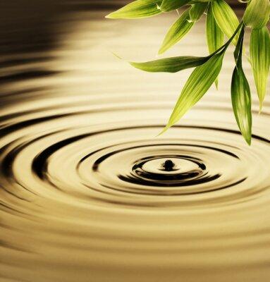 Bild Frischer Bambus-Blätter über Wasser