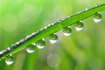 Bild Frisches Gras mit Tau Tropfen close up