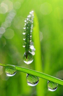 Bild Frisches Gras mit Tautropfen close up