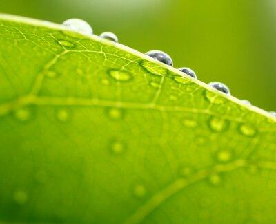 Bild Frisches grünes Blatt Hintergrund