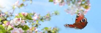 Bild Frühling 357