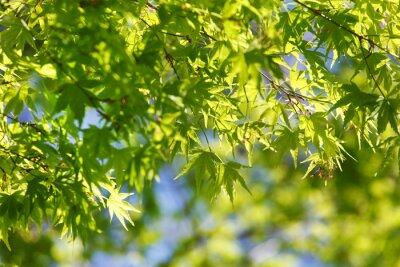 Bild Frühling Baum