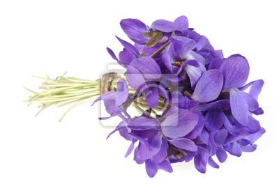 Bild Frühling Bouquet von Veilchen auf weißem Hintergrund