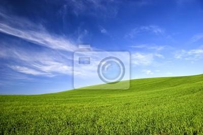 Frühling-Feld