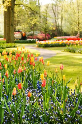Bild Frühling Garten