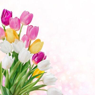 Bild Frühling Hintergrund