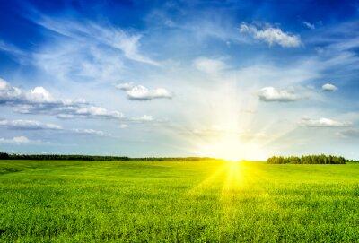 Bild Frühling Sommer grünen Feld Landschaft lanscape