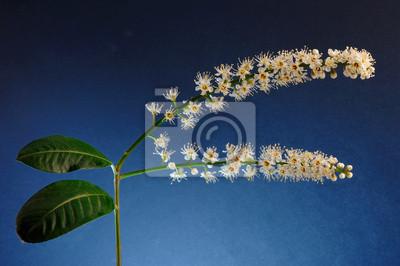 Bild Frühlings-Blumen und Blätter, die isoliert degradieren blau-schwarzen Hintergrund
