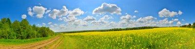 Bild Frühlingsblumenfeld