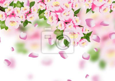 Bild Frühlingshintergrund, Blumen, Frühling