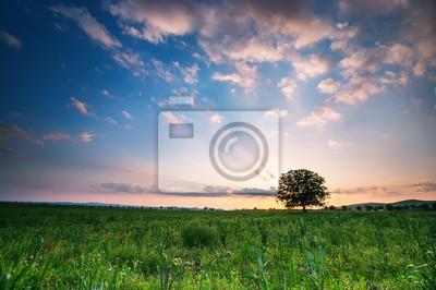 Frühlingswiese mit großer Baum