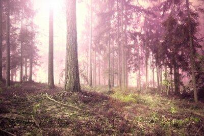 Furchtsame rosa rote gesättigte nebelige Waldbaumlandschaft. Farbfilter-Effekt verwendet.