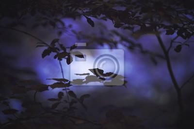 Furchtsamer dunkler violetter farbiger Wald mit Baumasthintergrund. Selektiver Fokus verwendet.