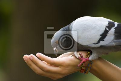 Füttern Sie einen Vogel