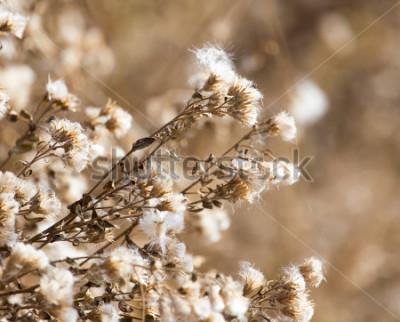 Bild fuzz auf der Pflanze im Freien im Freien