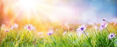 Bild Gänseblümchen auf Feld - abstrakte Frühlings-Landschaft