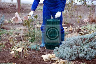Gardener unwrapping Metalldrahtgeflecht
