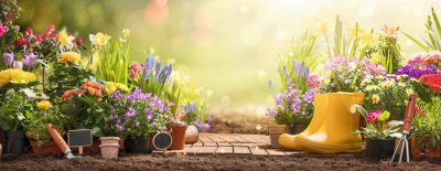 Bild Gardening Concept. Garden Flowers and Plants on a Sunny Background