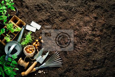 Bild Gardening tools and seedlings on soil
