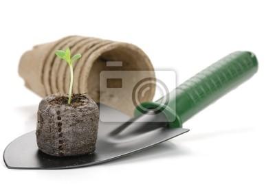 Bild Gartengeräte und Keimling