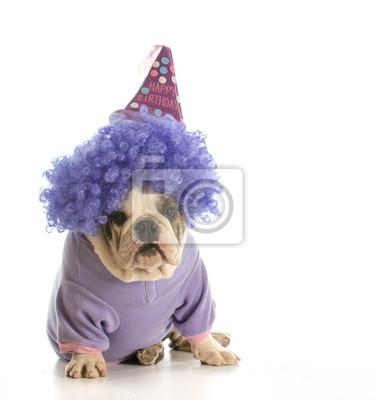 Geburtstag Hund Leinwandbilder Bilder Englische Bulldogge Tragen