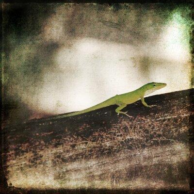 Bild Gecko Grün Cameleon Eidechse auf Brown Wood Branch