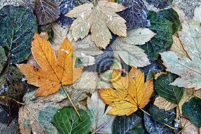 Gefrorene Blätter auf dem Boden
