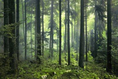 Geheimnisvolle dunklen Wald