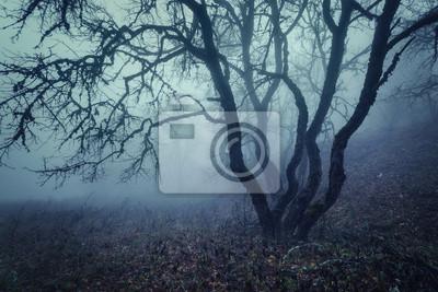 Geheimnisvolle Herbstwald im Nebel