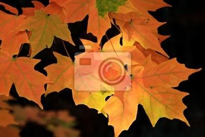 Bild Gelb-rote Ahornblätter auf schwarzem Hintergrund