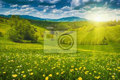 Gelbe Blumen in einer Frühlingswiese