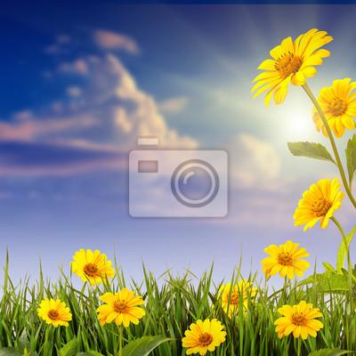 Gelbe Daisy Hintergrund