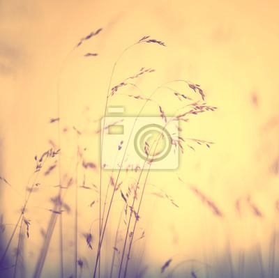 Gelbe Farbe Sonnenuntergang Licht verwischt Wiese Gras Hintergrund. Selektive Fokus und quadratische Zusammensetzung verwendet.