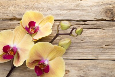 Bild Gelbe Orchidee.