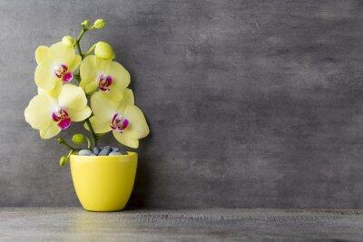 Bild Gelbe Orchidee auf dem grauen Hintergrund.