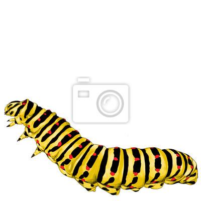 Gelbe Raupe Kriechen Skizze Vektor Grafiken Farbe Bild Leinwandbilder Bilder Larve Kriechen Raupe Myloview De