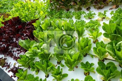 Gemüse In Dekorierten Vertikalen Garten Idee In Der Stadt