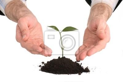 Bild Geschäftsleute, die eine Pflanze zwischen den Händen auf weiß
