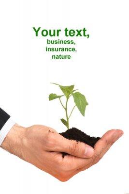 Bild Geschäftsleute eine Pflanze