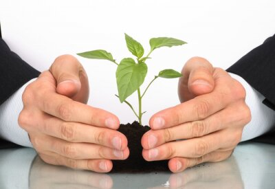 Bild Geschäftsleute eine Pflanze zwischen den Händen