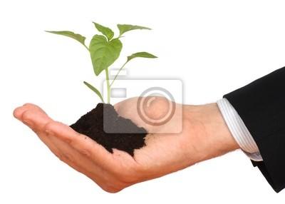 Bild Geschäftsleute, Pflanze