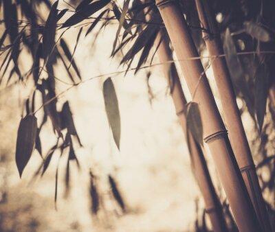 Bild Getönten Bild von einem Bambus-Pflanze