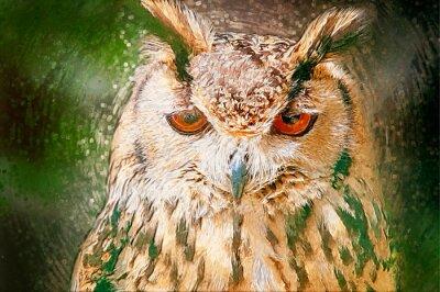 Bild Gezeichnet Owl Portrait