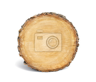Bild Glatte Querschnitt braun Baum Stumpf Scheibe mit Altersringen schneiden frisch aus dem Wald mit Holz Getreide isoliert auf weiß