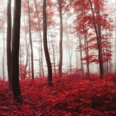 Bild Glow Light Herbstwald
