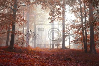 Golden red colored autumn season foggy forest landscape.